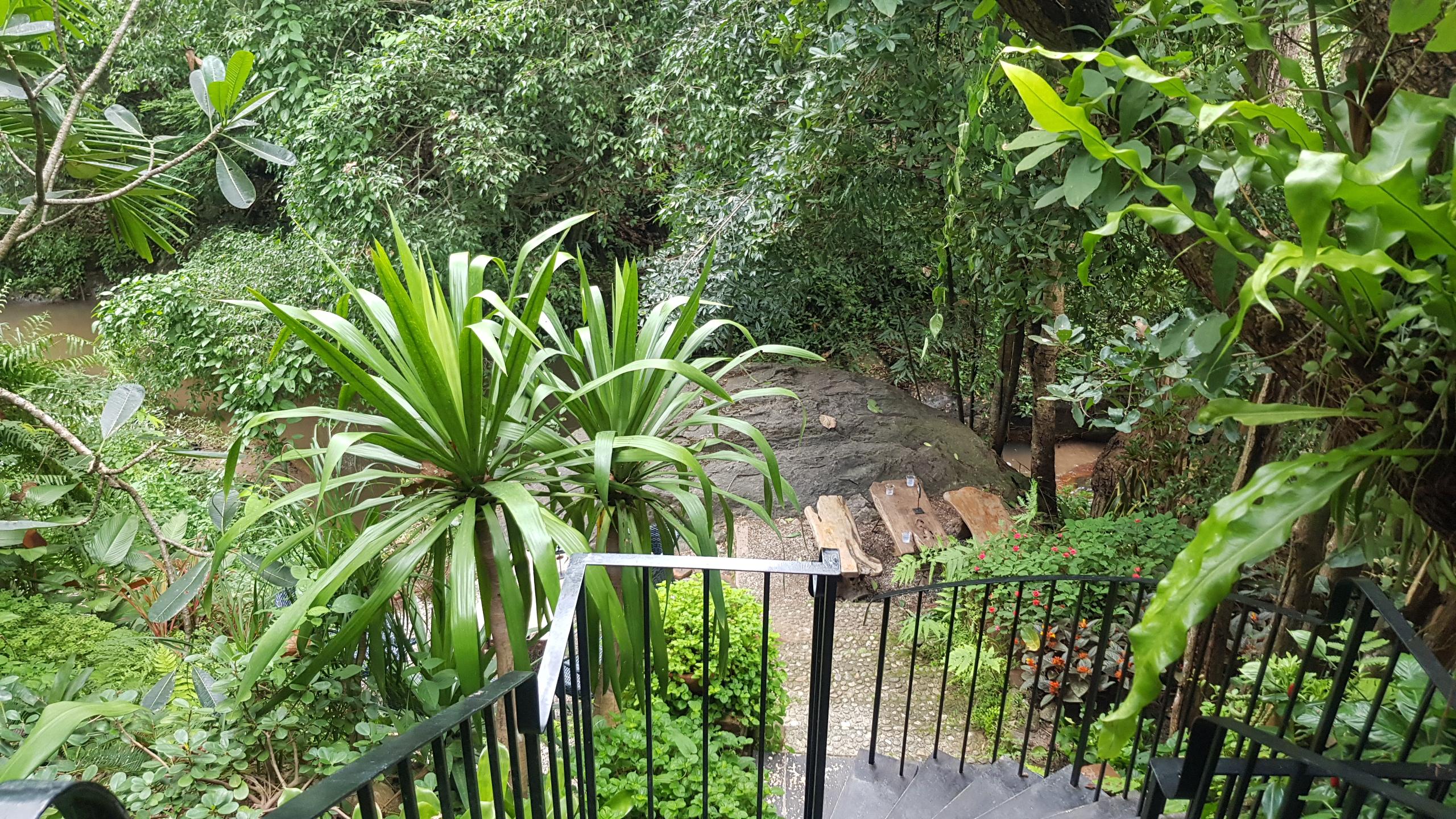 ทางเดินลงไปโซนที่นั่งบนโขดหิน ริมลำธาร ท่ามกลางแมกไม้ที่เขียวขจี @ Wild Coffee & Bistro