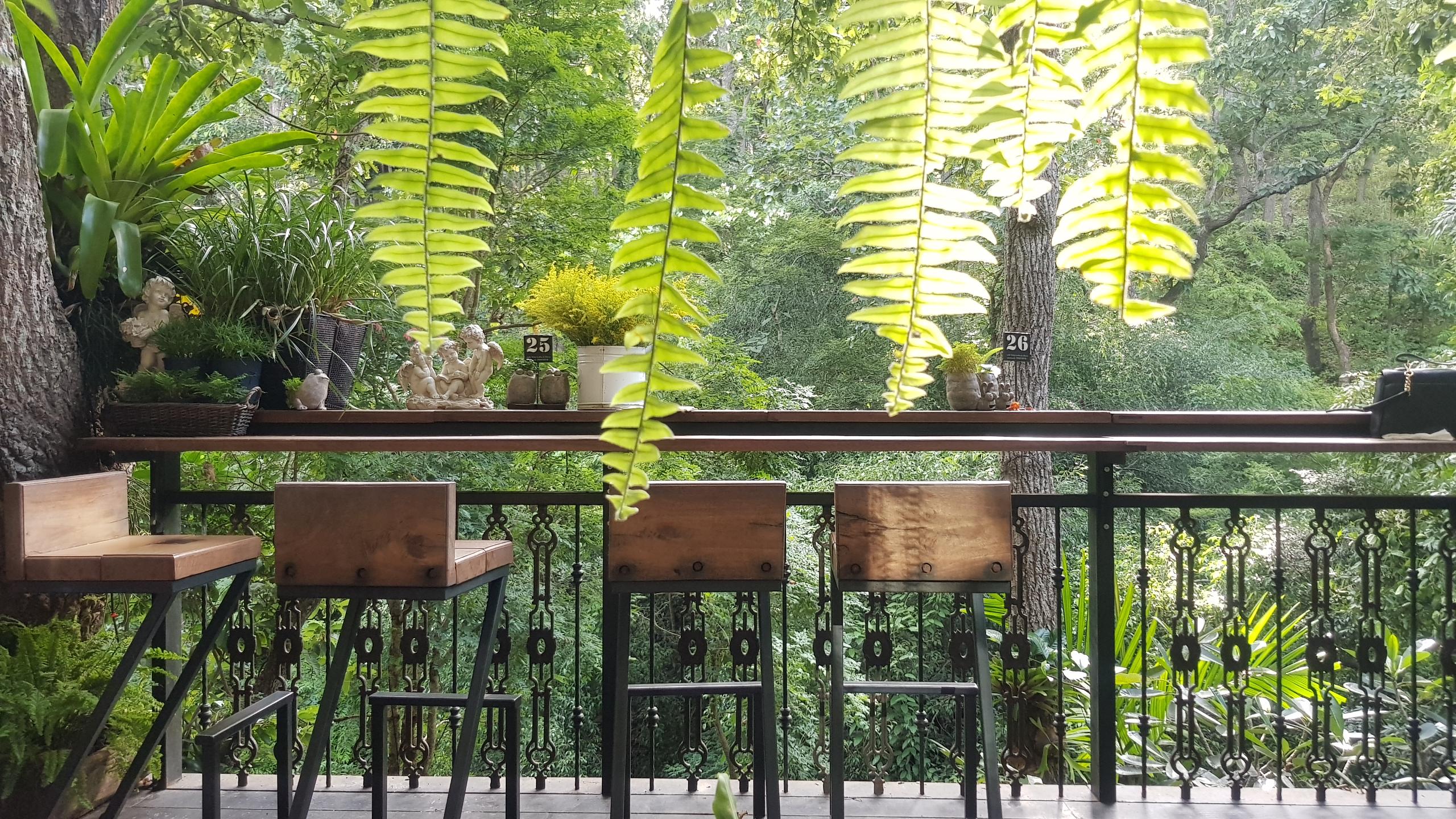 โซนเอ้าท์ดอร์ – เคาน์เตอร์ไม้ @ Wild Coffee & Bistro ให้คุณได้เสพวิวป่าเขา ลำธาร ได้อย่างเต็มอิ่ม