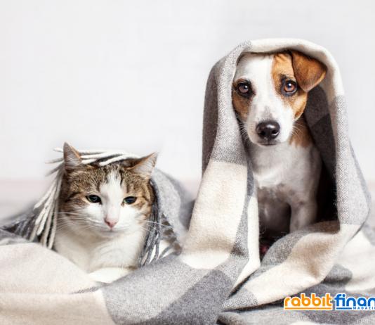 4 ข้อควรทำ ไม่ให้สัตว์เลี้ยงรบกวนเพื่อนบ้าน