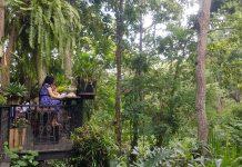 """""""Wild Coffee & Bistro"""" คาเฟ่ลับเปิดใหม่ที่ซ่อนตัวในป่าใหญ่"""