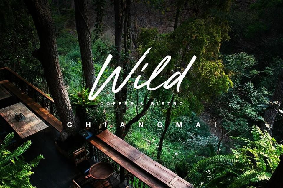 Wild Coffee & Bistro คาเฟ่กลางป่า เชียงใหม่