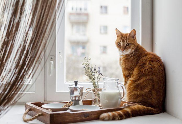 จัดบ้านให้แมว