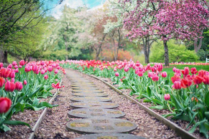 beautiful-bloom-blooming