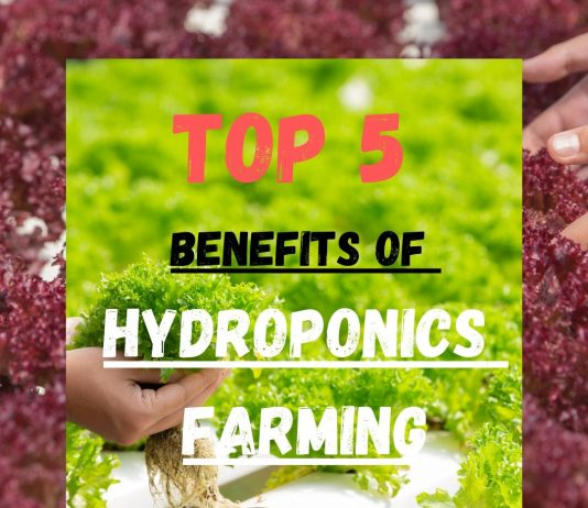TOP 5 BENEFITS จากการปลูกผักไฮโดรโปนิกส์