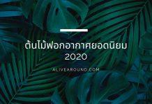 ต้นไม้ฟอกอากาศยอดนิยม 2020