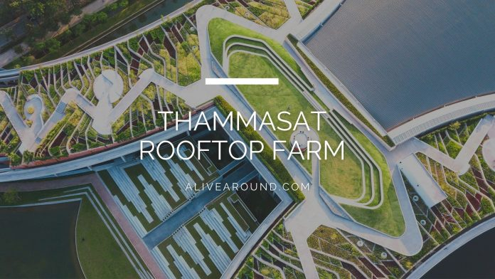 Thammasat rooftop farm